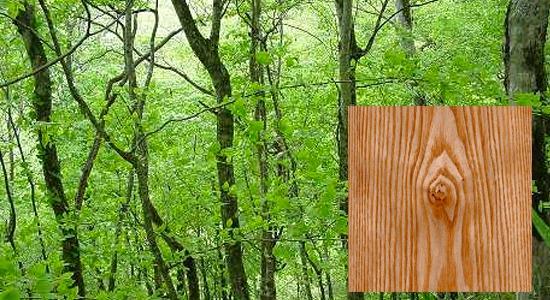 木製バット材「アオダモ」
