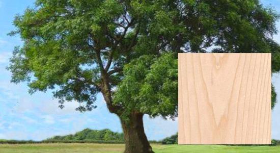 バット木材「ホワイトアッシュ」