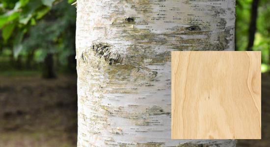 木製バット材「バーチ(樺)」