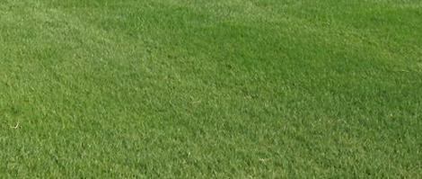 天然芝野球グラウンド